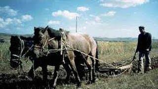 Лошадь пашет / Horse plow / Ходи лошадью / Русский мужик пашет землю / Конь с плугом