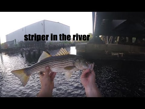 Catching Striper In The Concrete Jungle - Norfolk, Va (Elizabeth River)