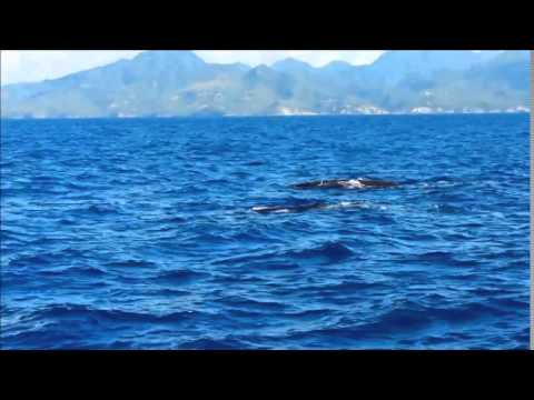 Dolphin & Whale Watching in St. Lucia on Lady Hack