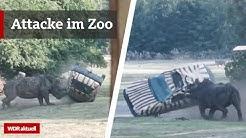 Nashorn rammt Auto von Tierpflegerin | WDR aktuell