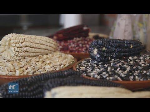 NAFTA  negotiation may endanger 3.5 million Mexican corn farmers