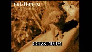 """Заставки рубрики """"Диалоги о животных"""" (РТР; Россия-1, 21.09.1997 - 25.06.2011)"""