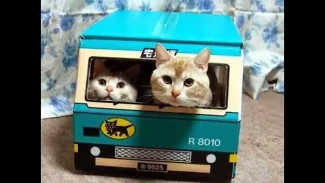 Kumpulan Foto Kucing Lucu Terbaik YouTube