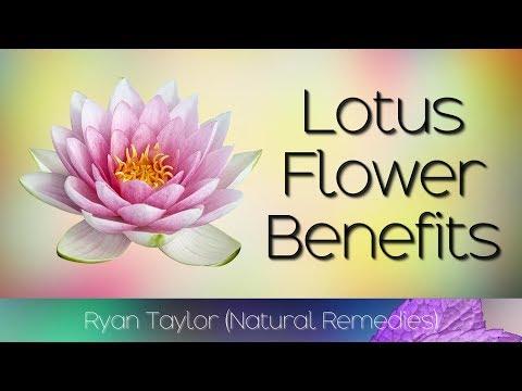 Lotus Flower: Benefits & Uses