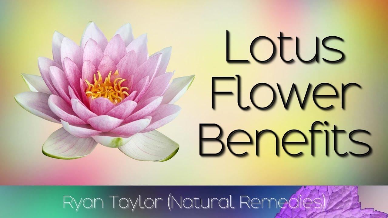 Lotus Flower Benefits Uses Youtube