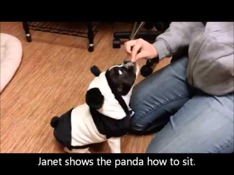 panda movie youtube
