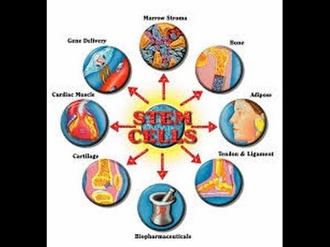 stem cells and the future of Stem cells are characterized based on two basic characteristics—a capability for self-renewal and a capability to develop into specialized cells the type of.