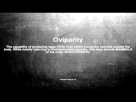 Medical vocabulary: What does Oviparity mean