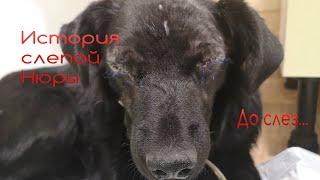 Слепую собаку Животные встречали в приюте Дари добро Новосибирск blind dog rescue