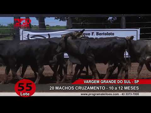LOTE 055