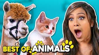 Cutest Animals Compilation ft. a Giraffe, Puppies | Best Of React