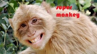 Видео обезьяна