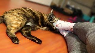 FOOT FETISH CAT