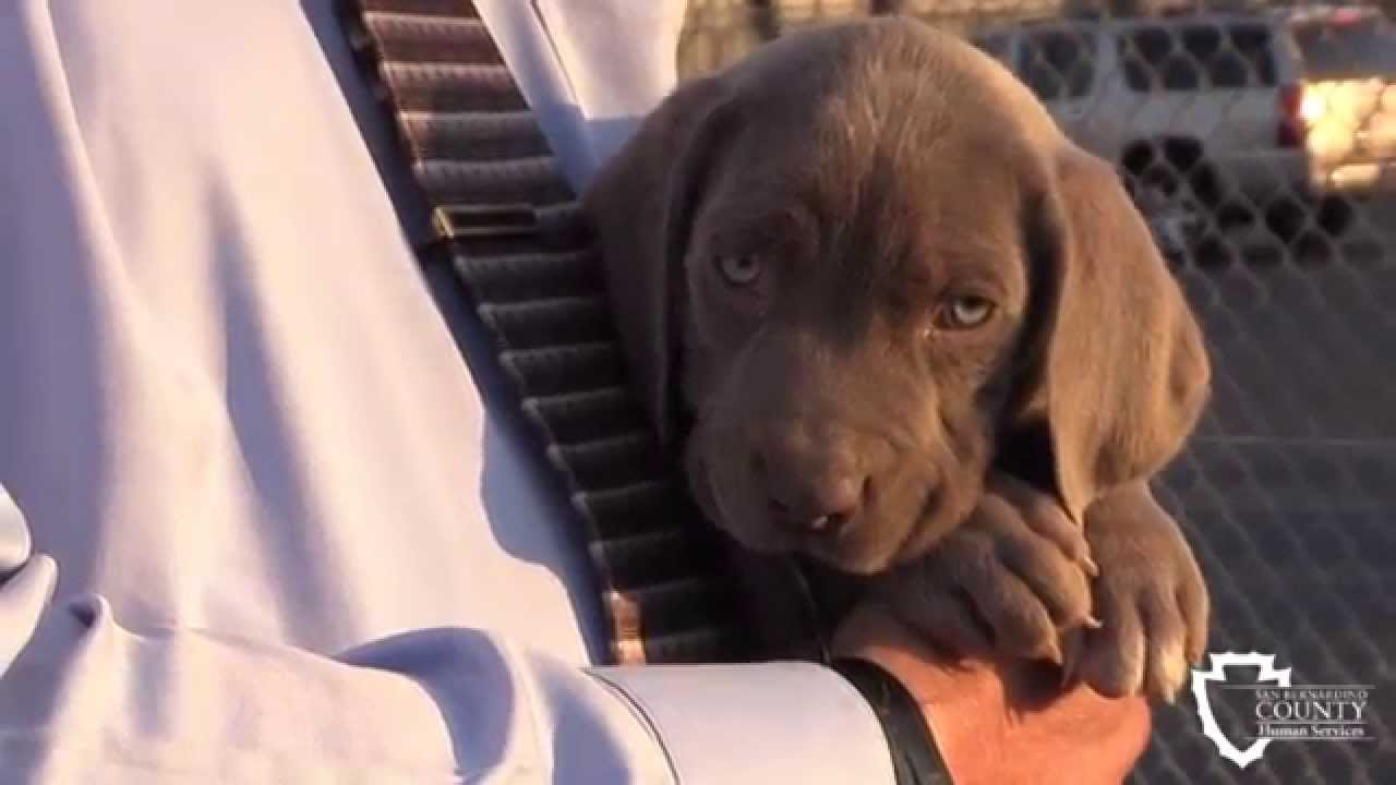 Devore Animal Shelter Dogs For Adoption