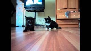 Большой котенок недоволен маленьким котенком.wmv