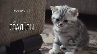 Wedding Evgeniy and Marina. Kazakhstan. Uralsk | Свадьба Евгений и Марина. Казахстан. Уральск