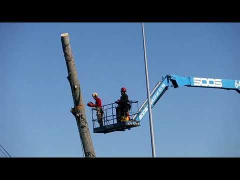 Talan un árbol de la Nacional VI contra el que colisionaron varios coches