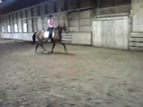 Odessa 1999 AHHA (American Holsteiner Horse Association) Mare FOR SALE