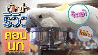 danse oiseau perroquet