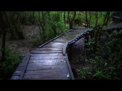 mada forest korangi from nag