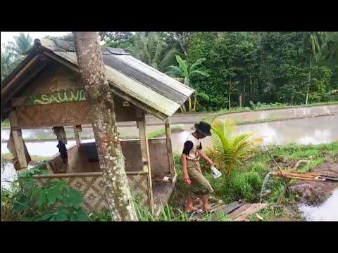 Kecapi Suling Sunda Merdu  Dengan  Hamparan Sawah Yg Indah Di Pedesaan.