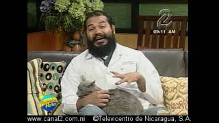 Raza de gato nebelung  Dr. Noel Martinez