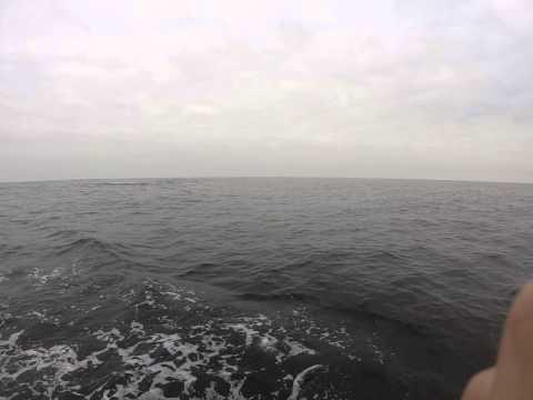 Whales in Luanda