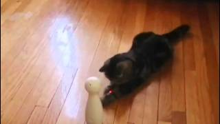 Frolicat Bolt Laser Cat Toy At Bed Bath & Beyond