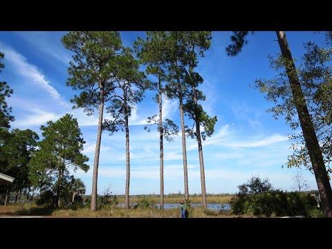 Ochlockonee River State Park -  FL