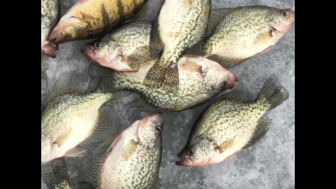 South dakota non stop crappie action ice fishing youtube for Ice fishing south dakota