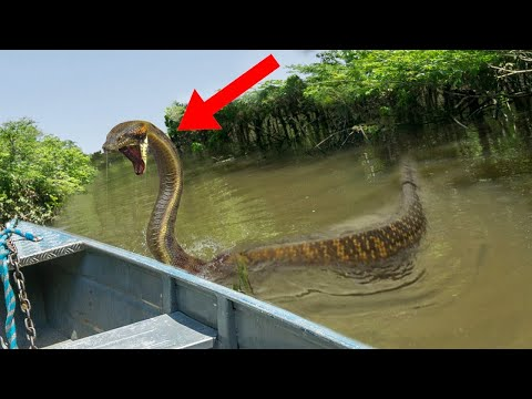 После Этого Видео Вы Никогда не Поедите в Амазонку - Видео онлайн