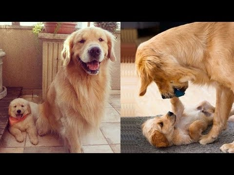 Mother Dog and Cute Puppies - beautiful, happy and meaningful moment of animal family - kiki tv 4