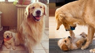 Mother Dog and Cute Puppies  beautiful, happy and meaningful moment of animal family  kiki tv 4
