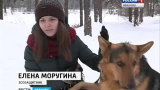 Догхантеры СЮЖЕТ от 21.01.16 (18+)