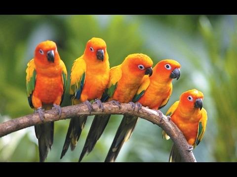 Birds of Australia | Australian Birds Documentary | Parrots of Australia | Outback Rainforest Parrot