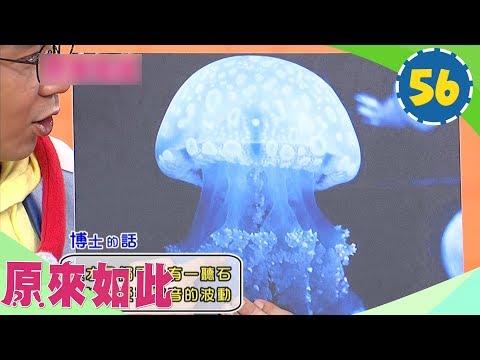YOYO夏日派對 妖怪體操 2016玩具展 | Doovi