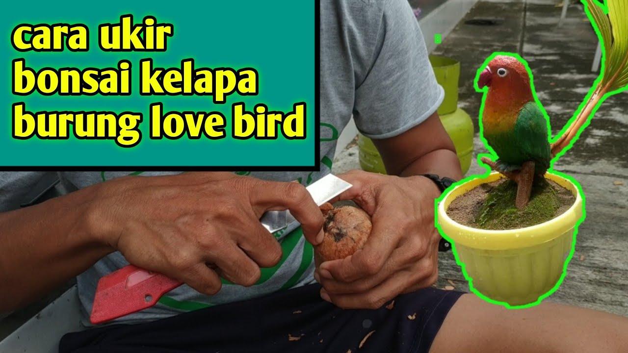Cara Ukir Bonsai Kelapa Burung Love Bird Youtube
