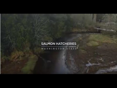 Salmon Hatcheries: Washington State
