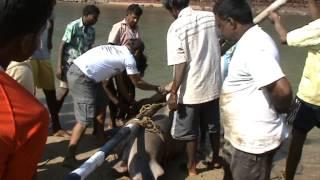 Акулы в ГОА