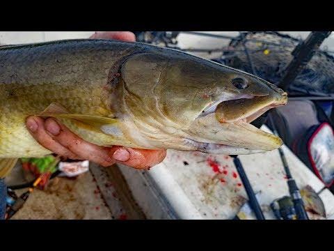 River Fishing - 9 Species Slam - Catching Catfish, Bluegill, Bowfin