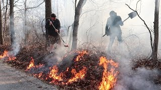 16 Acres of Forest 02: Clearing the Trees, Burning some Leaves