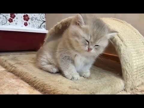 Funny Cats - Funny Cute Kittens Video Vines 2018
