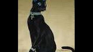 Вызов Духов. Египетская кошка.