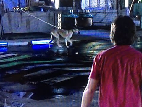 Back to the future dog walking drone