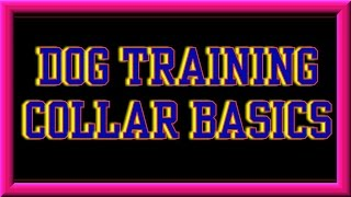 Dog Training Collar Basics