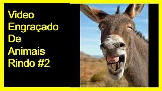 Video engraçado de animais rindo# 2#cachorro,galo,cabra,bode,burro,