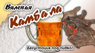 Вяленая Камбала дегустация с пивом