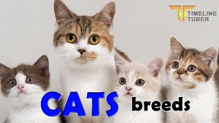 cat breeds | cat family  world most famous cat breeds