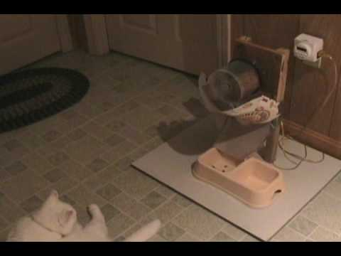 Cat's reaction to newly built Automatic Cat Feeder