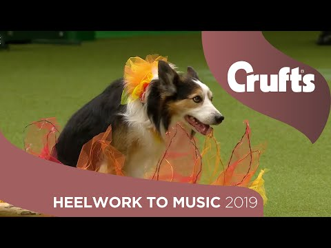 Freestyle Heelwork to Music Competition - Part 3 | Crufts 2019